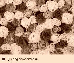 В Омске перед Днем всех влюбленных подняли цены на цветы