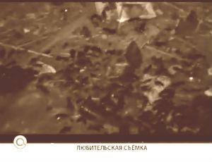Тараканы: нашествие из-под земли